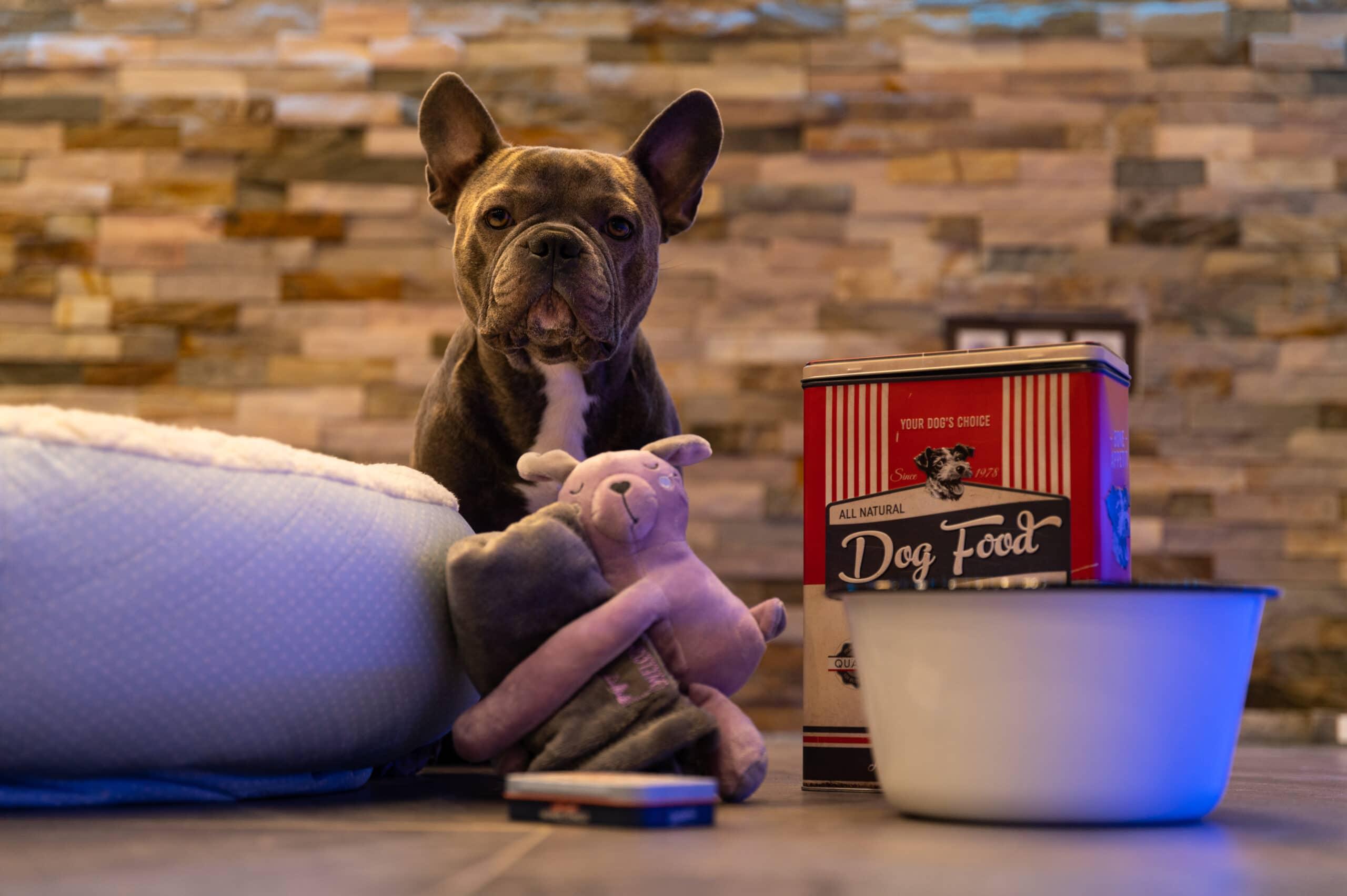 Französische Bulldogge Trüffel wacht über Pelles Erstausstattung.