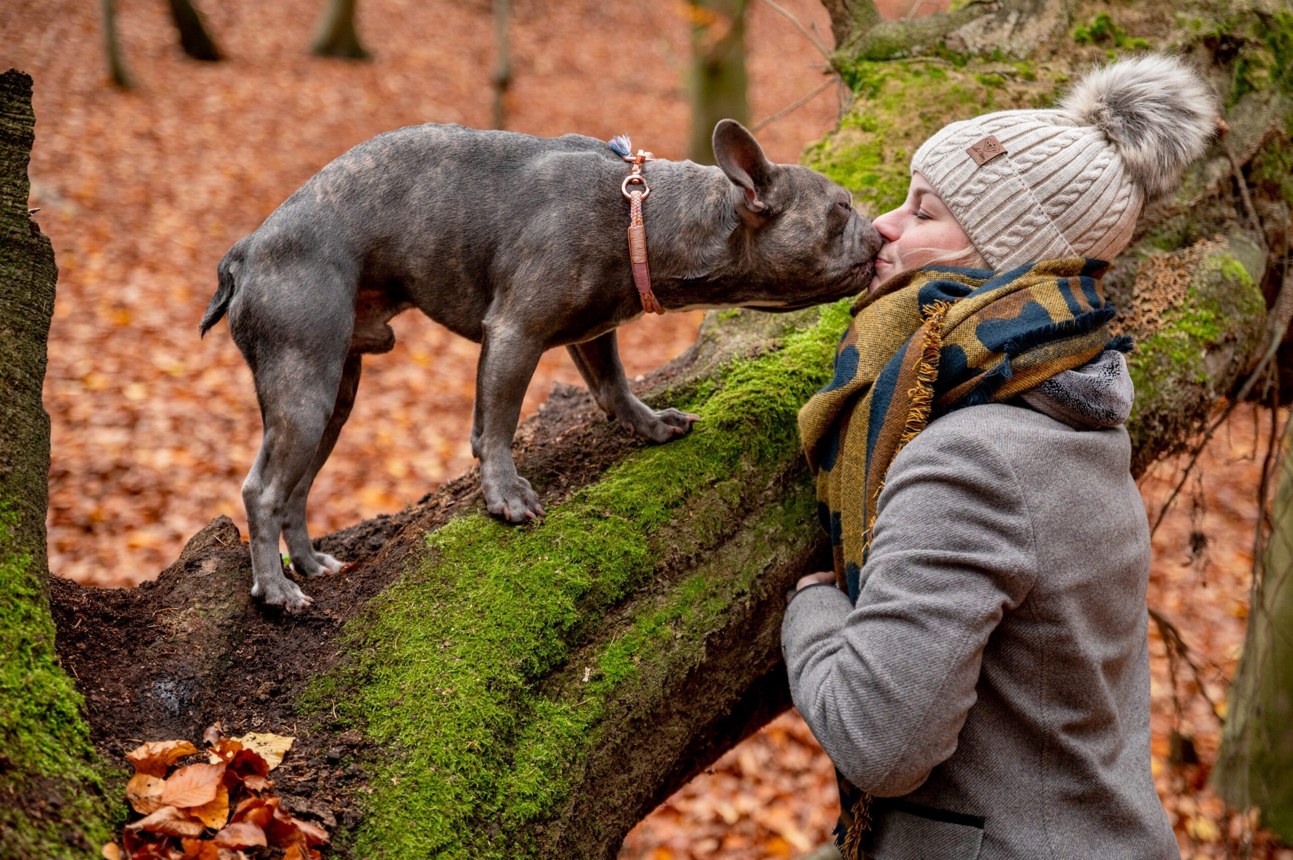 Französische Bulldogge Trüffel knutscht Hundemama