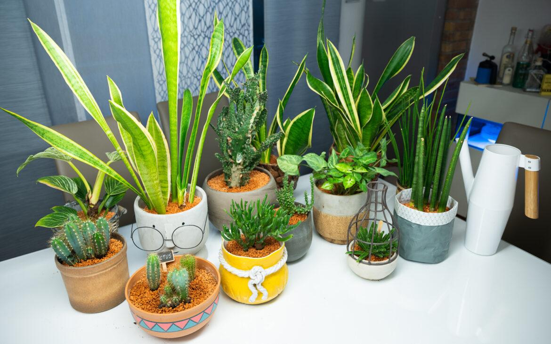 Zimmerpflanzen, Kakteen und Sukkulenten fühlen sich im Pflanzgranulat wieder wohl.