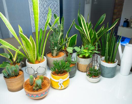 Zimmerpflanzen ohne Schädlinge: So macht Ihr Trauermücken und Springschwänzen den Gar aus.